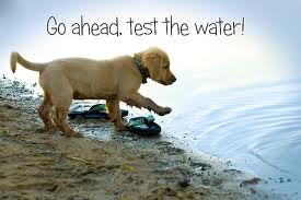 doggie-test-the-water